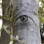 2009 | Baeume haben Augen | Schweiz